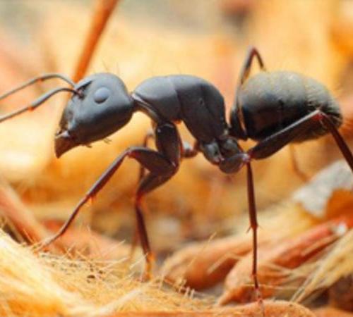 上海白蚁防治中心给大家一些白蚁防治的技巧!