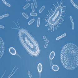 微生物协同处理技术