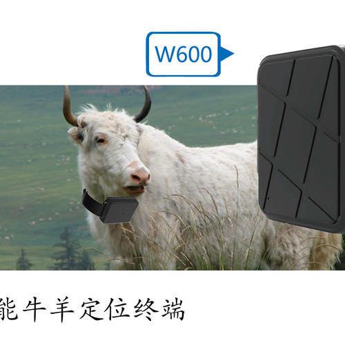动物GPS定位系列(W600)