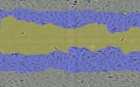 细胞划痕分析.png