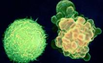细胞凋亡检测