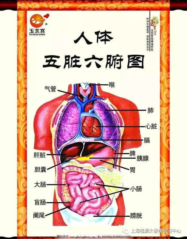 「魂源养生」:五脏养生大全:养心、舒肝、健脾、润肺、藏肾!