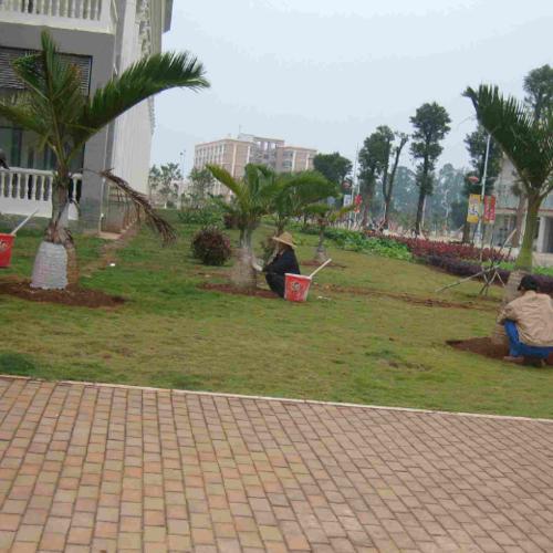 绿化工程养护