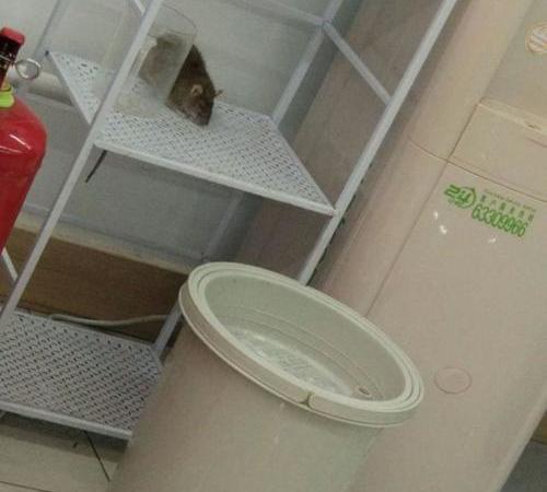 上海灭鼠公司用老鼠药安全吗?老鼠药有什么分类。