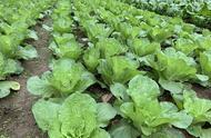 农副产品加工为何都会选在农村?