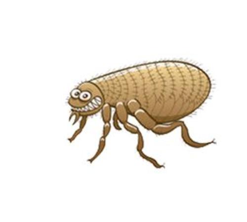 上海灭虫公司