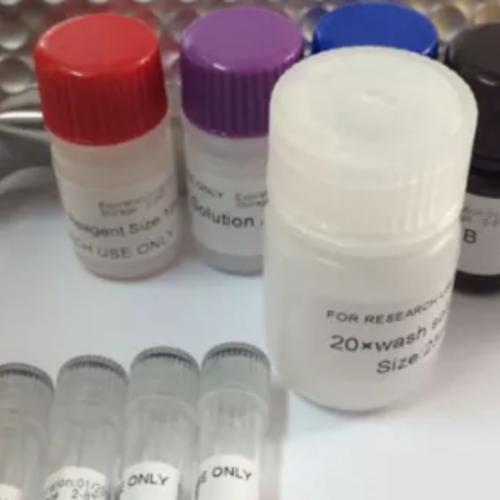 人凝血因子Ⅷ(FⅧ)ELISA试剂盒