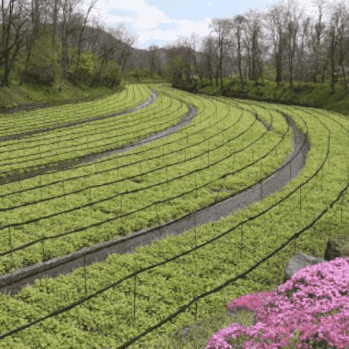 田园综合体规划的要点