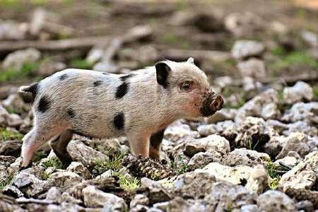 重磅!防控非洲猪瘟消毒剂怎么选,权威发布来了!