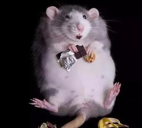 老鼠会传播哪些疾病?