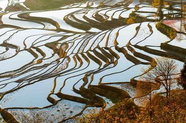 中国 云南 元阳梯田 Yuanyang Terrace Yunnan China