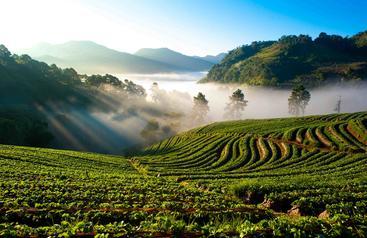 泰国 清迈 Chiang Mai Thailand
