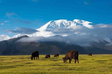 中国 新疆 帕米尔高原 Pamirs Xinjiang China