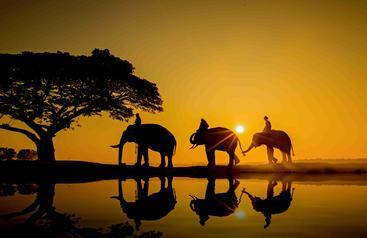 泰国 素林 Surin Thailand