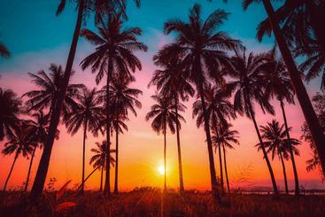 落日  Setting sun
