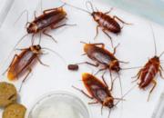 办公室有蟑螂怎么办?上海除蟑螂公司有妙招!