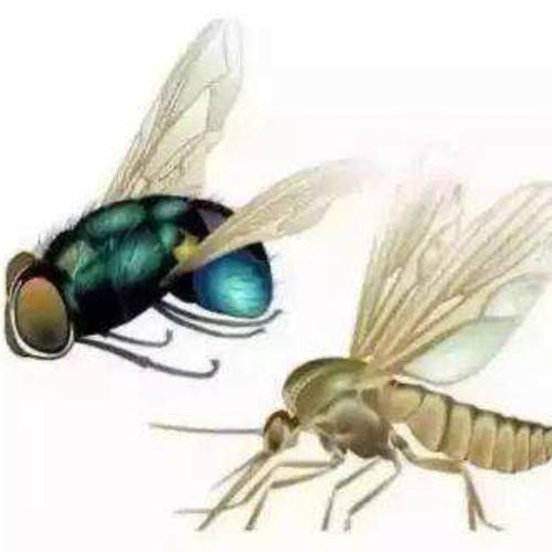 小区蚊蝇防治