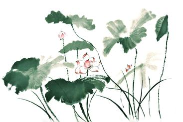 水墨画 荷花 Ink-wash painting of lotus
