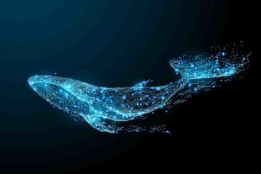 鲸鱼 Whale