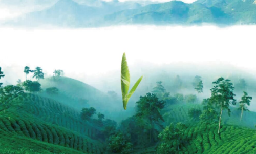 河南固始茶2019走进上海茶博会带来无公害无污染有机茶来沪