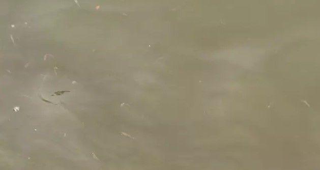 水质恶化-2.jpg
