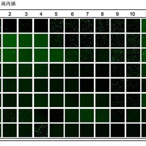 相分离蛋白高通量筛选试剂盒