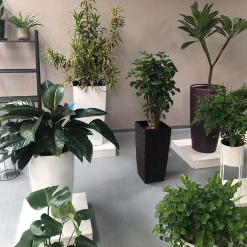 室内花卉租赁