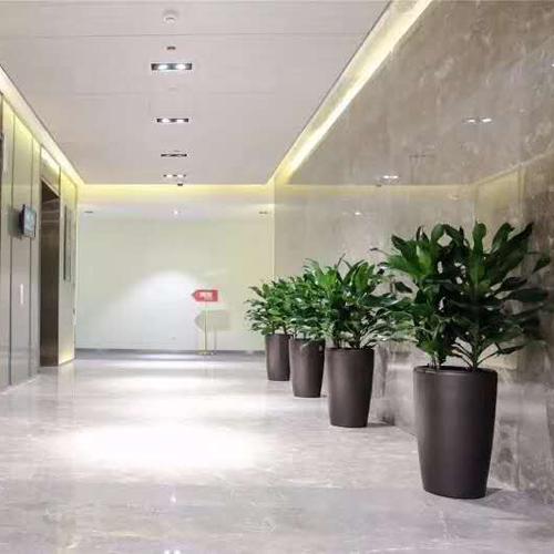 办公室花卉租赁