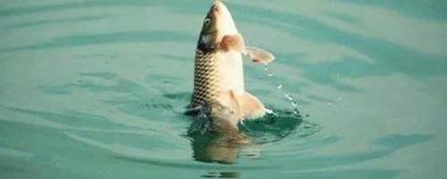 进入冬季,水产人做好这些准备让鱼儿好过冬