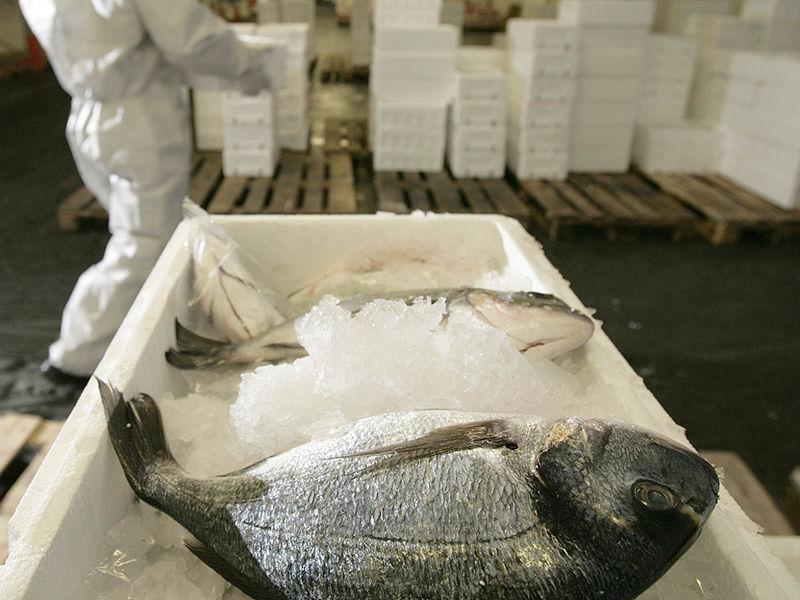 海鲜鱼上海航空托运公司
