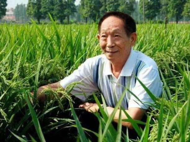 共和国勋章获得者袁隆平:稻田里的大梦想