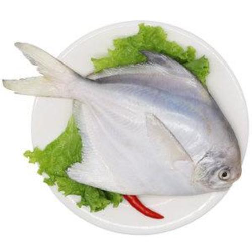 鲳鱼.jpg