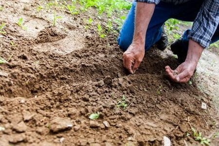 农产品没以前好吃!你的健康,正从土壤中流失!