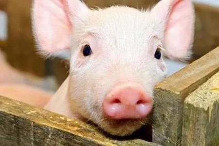 非洲猪瘟疫情风险犹在,农业农村部再次明确推荐消毒产品种类