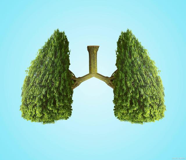 肺.jpeg