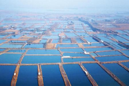"""生态养殖势在必行!农业农村部:2020年起实施水产绿色健康养殖""""五大行动"""""""