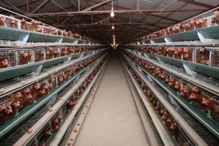 规模鸡舍冬季防寒保温措施