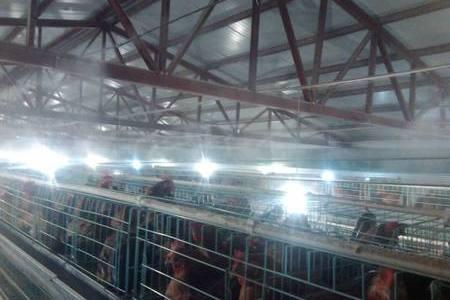 雏鸡舍内空气环境的管理