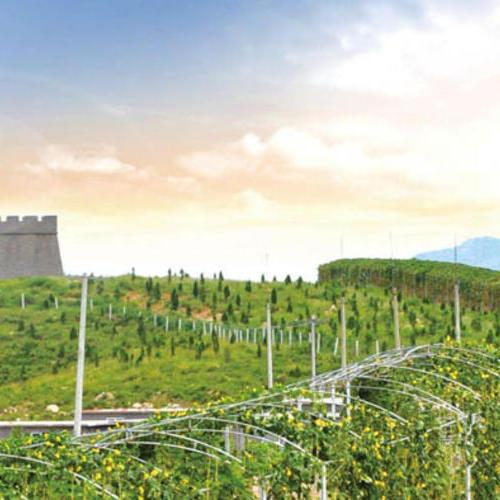 16个省现代农业产业园创建及扶持政策汇总,补贴高达1个亿