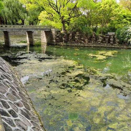 泰缘复合水生态修复技术+微生态激活袋,让持续青苔爆发的景观湖恢复水光潋滟