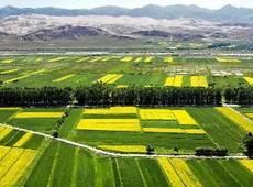 农业产业强镇为乡村产业筑牢新高地