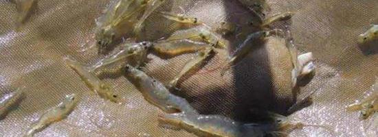 秋季謹防弧菌感染,一旦中招趕快用這個方案除害!