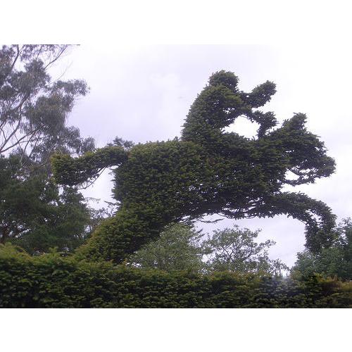 【园艺养植】奇特的园林植物造型