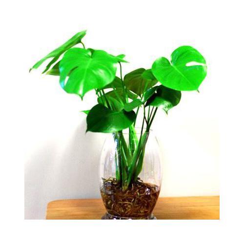 室内绿色植物过多,容易造引起眼睛疲劳