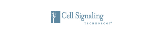Cell Signaling CST ,9947S,DNA Damage Antibody Sampler Kit