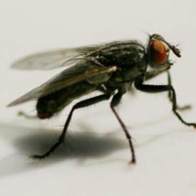 灭苍蝇服务