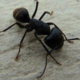 灭蚂蚁服务