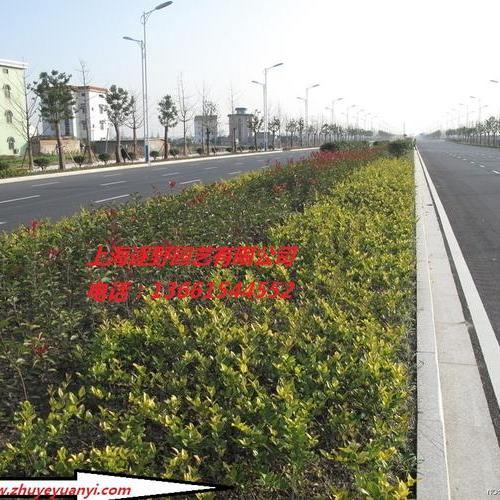 綠化工程3