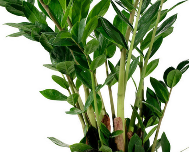 室内盆栽绿化