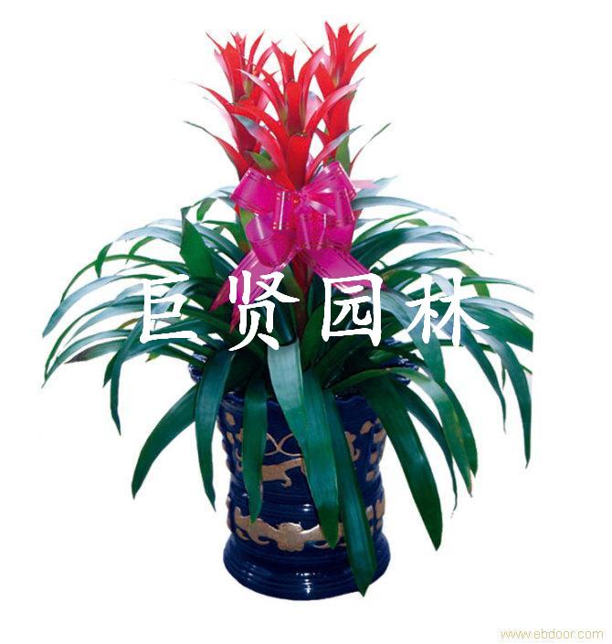 凤梨_副本.jpg